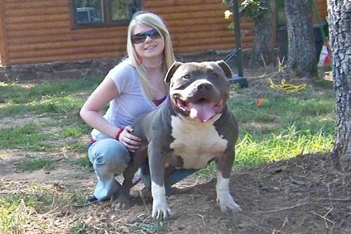 Dog Adoption Kennels
