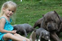 My daughter with Boogie and pups