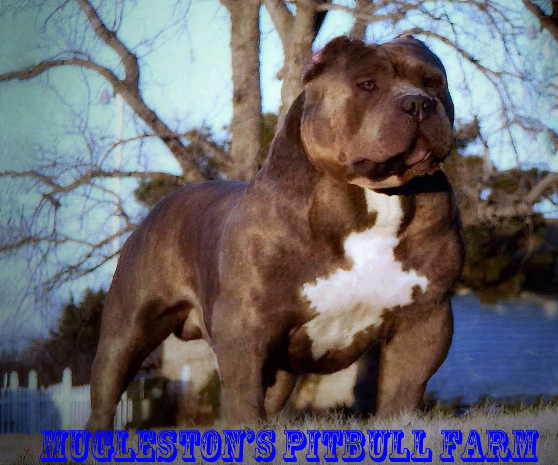 Blue pits for sale in kentucky - An Error Occurred