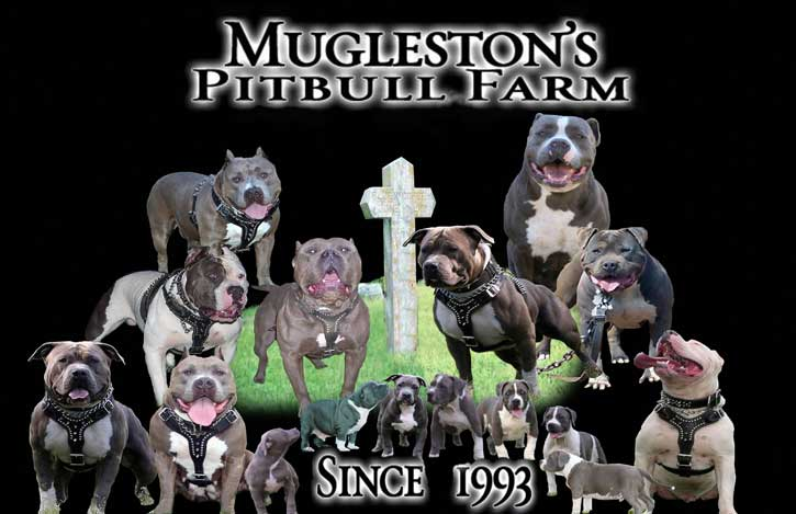 Mugleston's Pitbull Farm